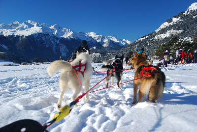 Chien de traineau randonnee annecy rando attitude alpes for Balade chien de traineau doubs